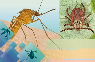"""imagem do post do """"Identificação de artrópodes vetores com impacto em Saúde Pública em Portugal: mosquitos e carraças"""" com nova data"""