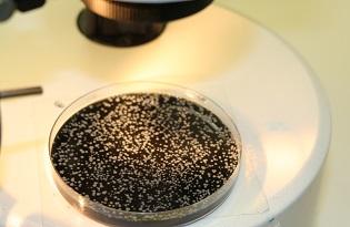 imagem do post do Legionella species: deteção, identificação e quantificação