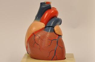 imagem do post do Museu da Saúde – Peça do mês de setembro de 2019
