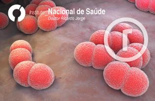 imagem do post do Doença Invasiva Meningocócica em Portugal – Relatório 2007-2017